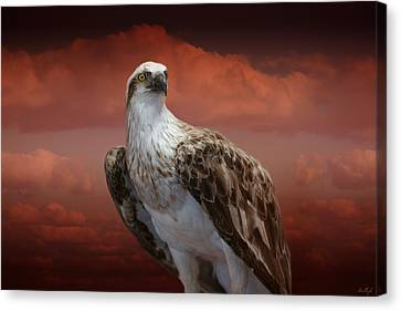 Canvas Print featuring the photograph The Glory Of An Eagle by Holly Kempe