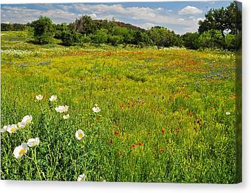 The Glory Of Spring Canvas Print by Lynn Bauer