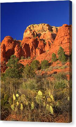 The Glory Of The Desert Red Rocks 1 Canvas Print