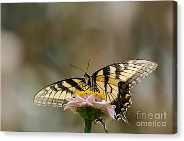 The Glow Through Nature Stain Glass Canvas Print by Donna Brown