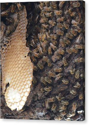 The Golden Hive  Canvas Print by Shawn Marlow
