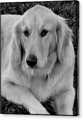 The Golden Retriever Canvas Print by James C Thomas