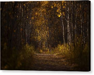 The Golden Road Canvas Print by Stuart Deacon
