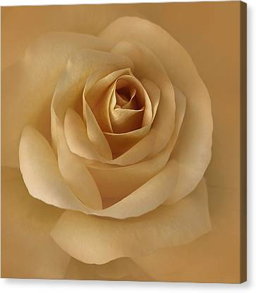 The Golden Rose Flower Canvas Print by Jennie Marie Schell