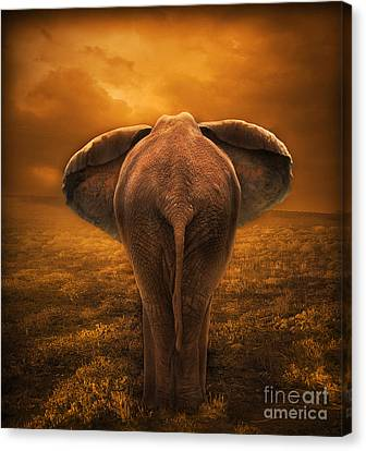 The Golden Savanna Canvas Print by Lynn Jackson