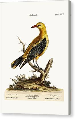 The Golden Thrush Canvas Print by Splendid Art Prints