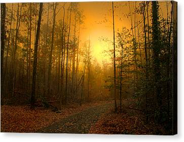 The Golden Touch Of Autumn Canvas Print by Nina Fosdick