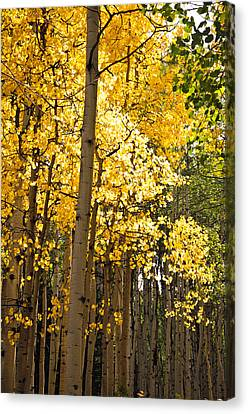 Canvas Print featuring the photograph The Golden Tree by Eric Rundle
