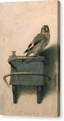 Illustrations Canvas Print - The Goldfinch by Carel Fabritius