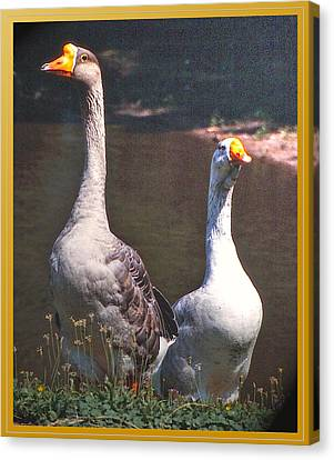 The Goose And The Gander Canvas Print by Patricia Keller