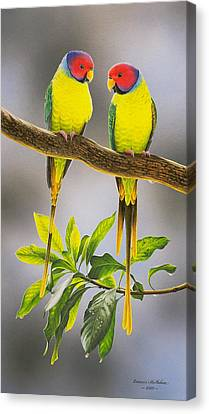 The Gorgeous Guys - Plum-headed Parakeets Canvas Print by Frances McMahon