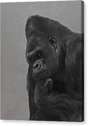 The Gorilla Canvas Print by Ernie Echols