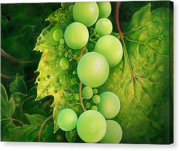 The Grapes Canvas Print by Anna Ewa Miarczynska