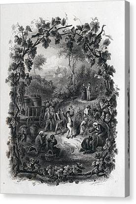 The Grapes Harvest In France Canvas Print
