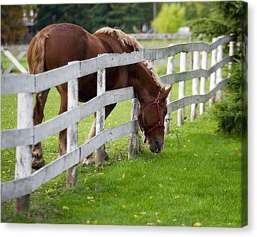 The Grass Is Always Greener Canvas Print by Jeff Ross