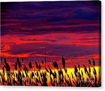 The Grasses Reach  Canvas Print by Q's House of Art ArtandFinePhotography