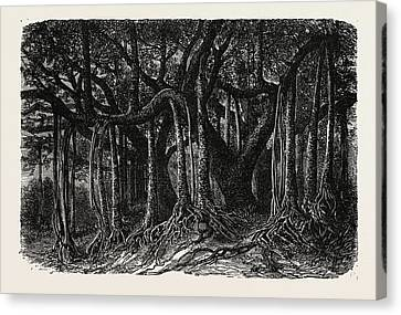 The Great Banyan, Or Sacred Tree Canvas Print by Indian School