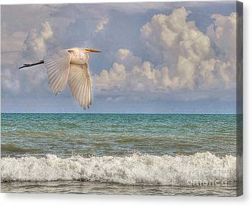 The Great Egret And The Ocean Canvas Print by Kathy Baccari