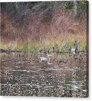 The Great Heron's Autumn Reflections Canvas Print by Maria Urso