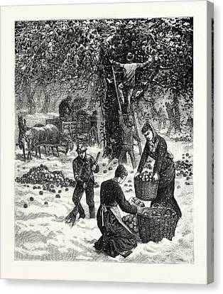 The Great October Storm, Farmers Hastily Gathering Canvas Print by American School