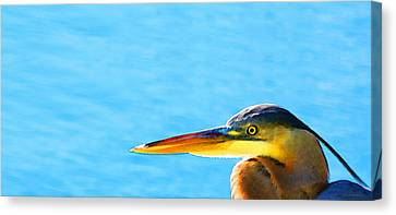 The Great One - Blue Heron By Sharon Cummings Canvas Print