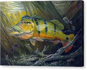 The Great Peacock Bass Canvas Print