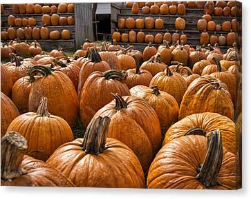 The Great Pumpkin Farm Canvas Print