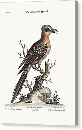 The Great Spotted Cuckow Canvas Print by Splendid Art Prints