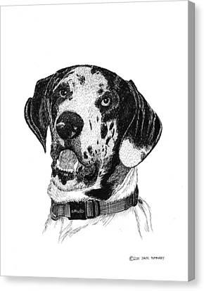 The Greatest Dane Canvas Print by Jack Pumphrey