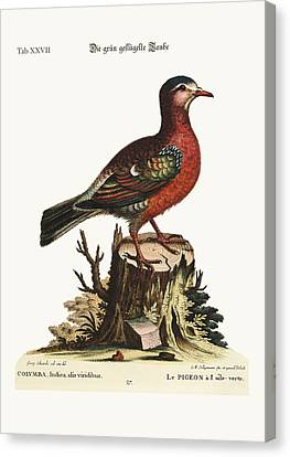 The Green-winged Dove Canvas Print by Splendid Art Prints