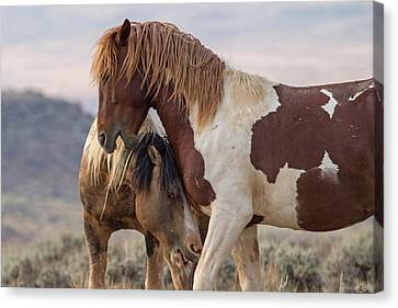 Crazy Horse Canvas Print - The Greeting by Sandy Sisti