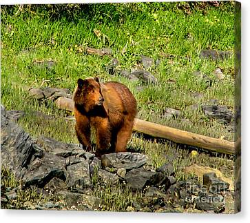 The Grizzly Canvas Print by Robert Bales