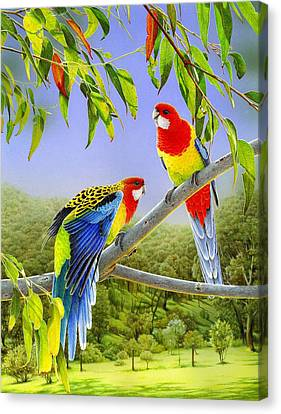 The Happy Couple - Eastern Rosellas  Canvas Print by Frances McMahon