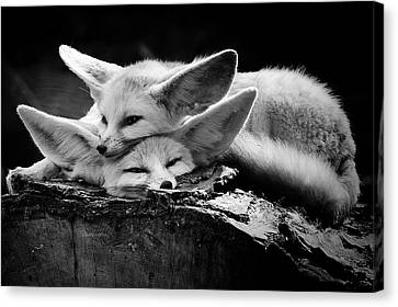 Pairs Canvas Print - The Happy Couple by Inna Blar