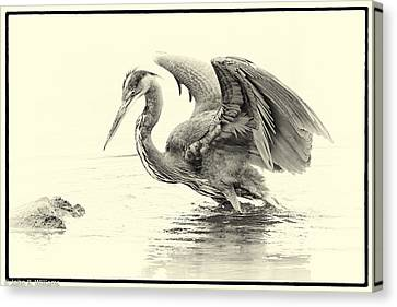 The Harpy Canvas Print by John Williams