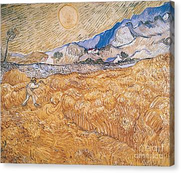 The Harvester Canvas Print by Vincent Van Gogh