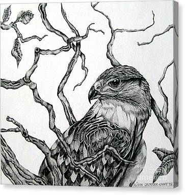 Canvas Print featuring the drawing The Hawk by Alison Caltrider