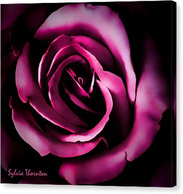 The Heart Of A Rose Canvas Print by Sylvia Thornton