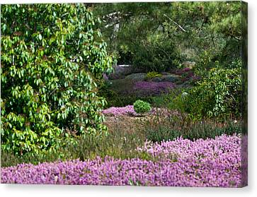 Canvas Print featuring the photograph The Heather Path by Sabine Edrissi