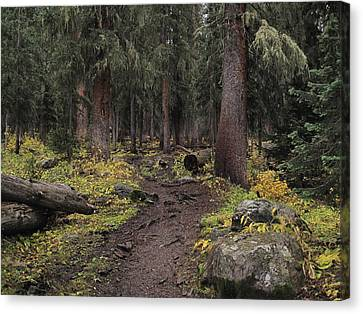 The High Forest Canvas Print by Eric Glaser