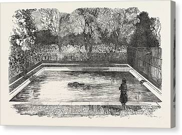 The Hippopotamus In His New Bath In The Zoological Societys Canvas Print by English School