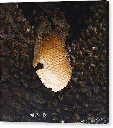 Shawn Marlow Canvas Print - The Hive  by Shawn Marlow