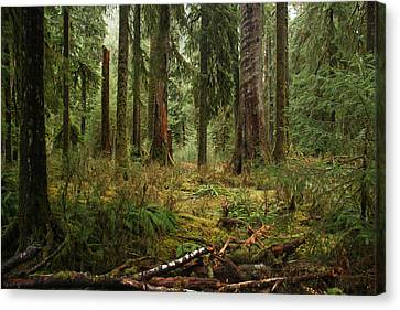 The Hoh Rainforest Canvas Print by John Bushnell