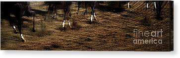 The Home Stretch  Canvas Print by Steven  Digman
