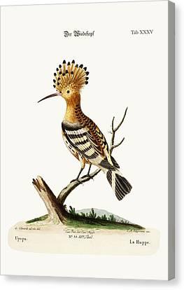 The Hoopoe Canvas Print by Splendid Art Prints