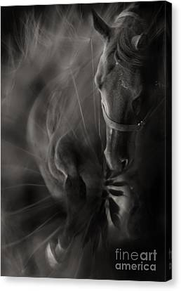 Crazy Horse Canvas Print - The Horse And Dandelion by Angel  Tarantella