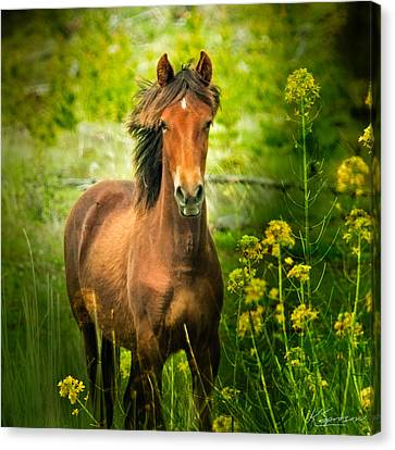 The Horse In The Wildflowers Canvas Print