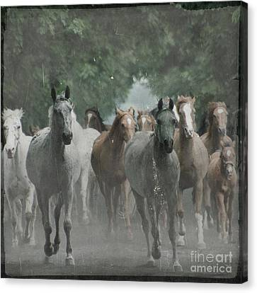 The Horsechestnut Tree Avenue Canvas Print by Angel  Tarantella