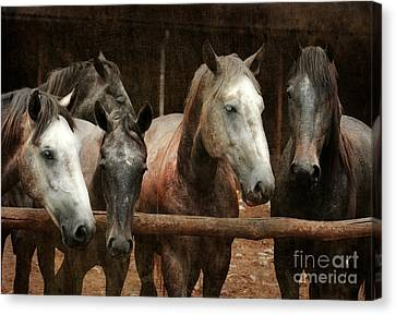 Bay Horse Canvas Print - The Horses by Angel  Tarantella