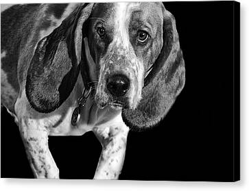 The Hound Canvas Print by Camille Lopez